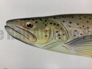Trout-Salmon Antique Lithographs & Engravings