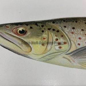 Trout Salmon Antique Lithographs & Engravings to Buy Now