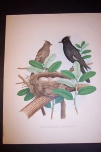 Thomas Gentry Bird chromolithograph from 1888