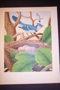 Thomas Gentry Chromolithograph Blue Jay 0226 135.