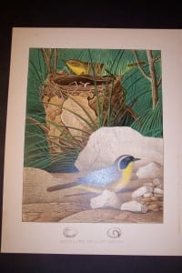 Thomas Gentry Chromolithograph Maryland Yellow Throat 0229