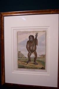 Compte de Buffon Monkey Framed 38