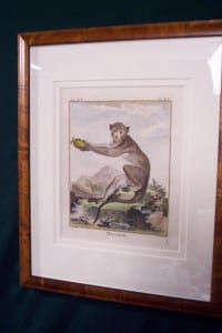 Compte de Buffon Monkey Framed 39