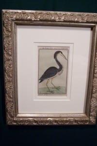 0246   Old engraving of water bird by Buffon