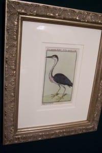 0248   Old engraving of water bird by Buffon