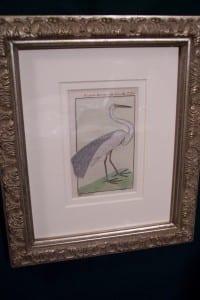 0249   Old engraving of water bird by Buffon