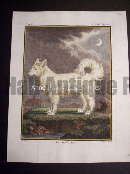 Buffon dog Le Chien Loup