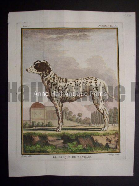 Buffon Dog Engraving Le Braque de Bengale