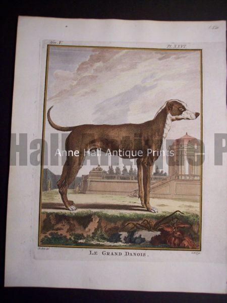 Buffon Dog Engraving Le Grand Danois
