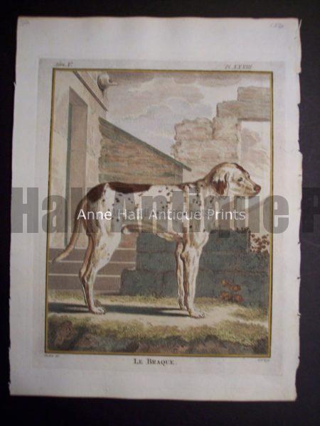 Buffon Dog Engraving Le Braque