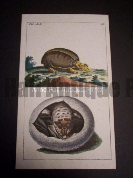 Wilhelm sea life print turtles 0389