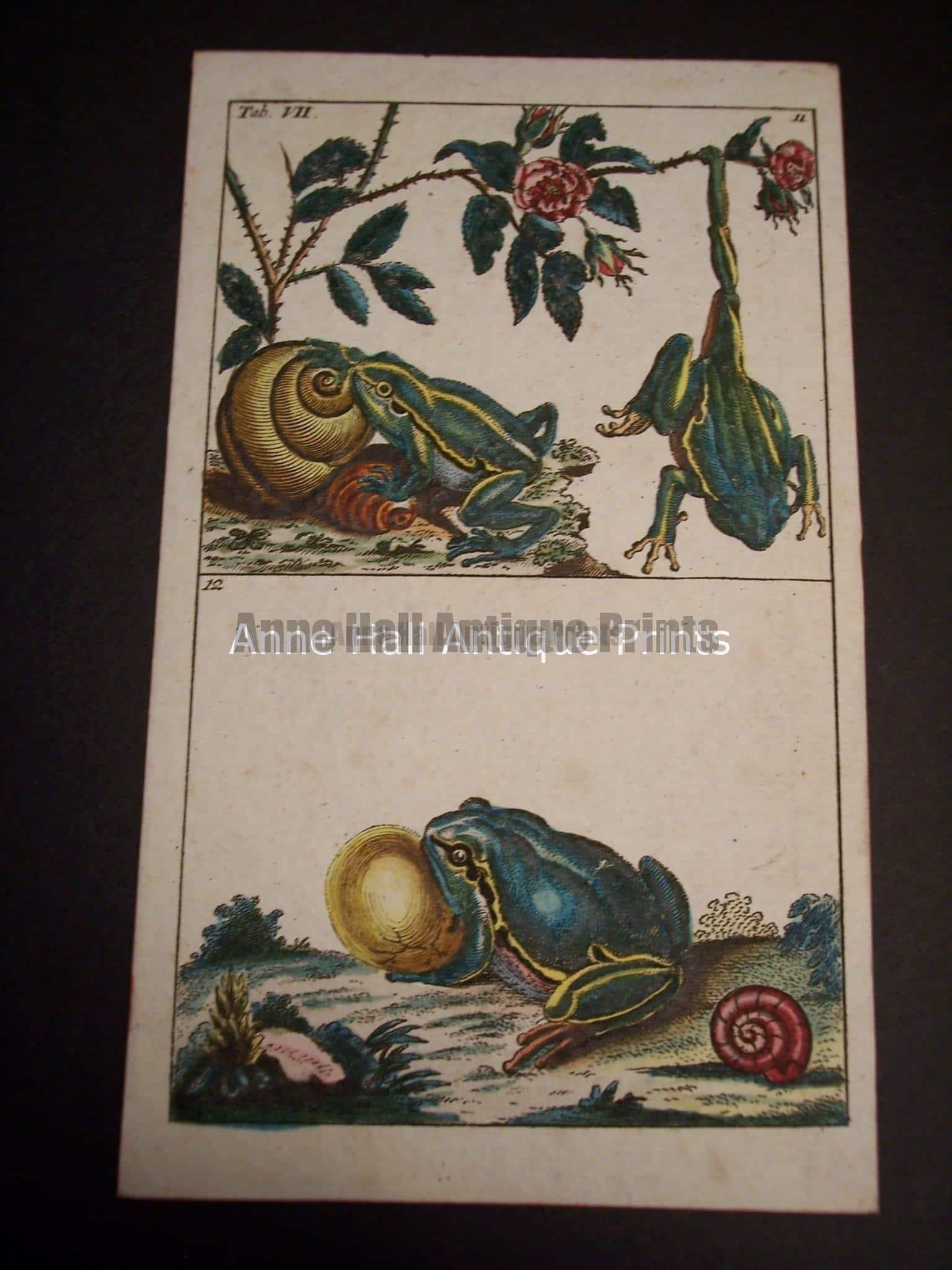 Wilhelm Frog Print 390