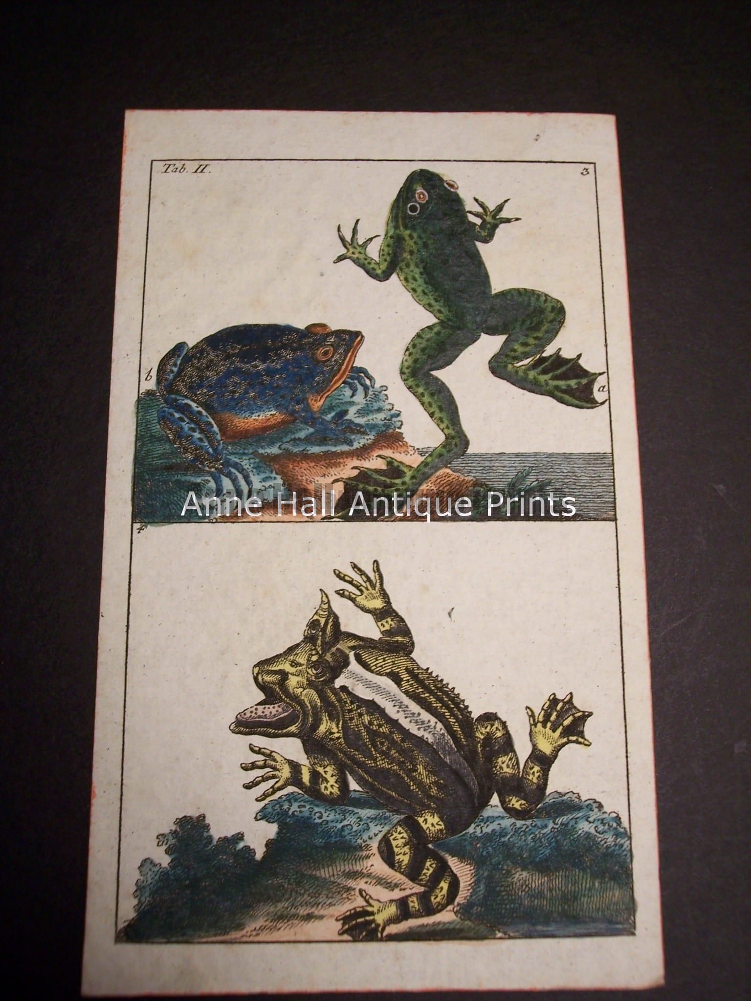 Wilhelm Frog Print 391