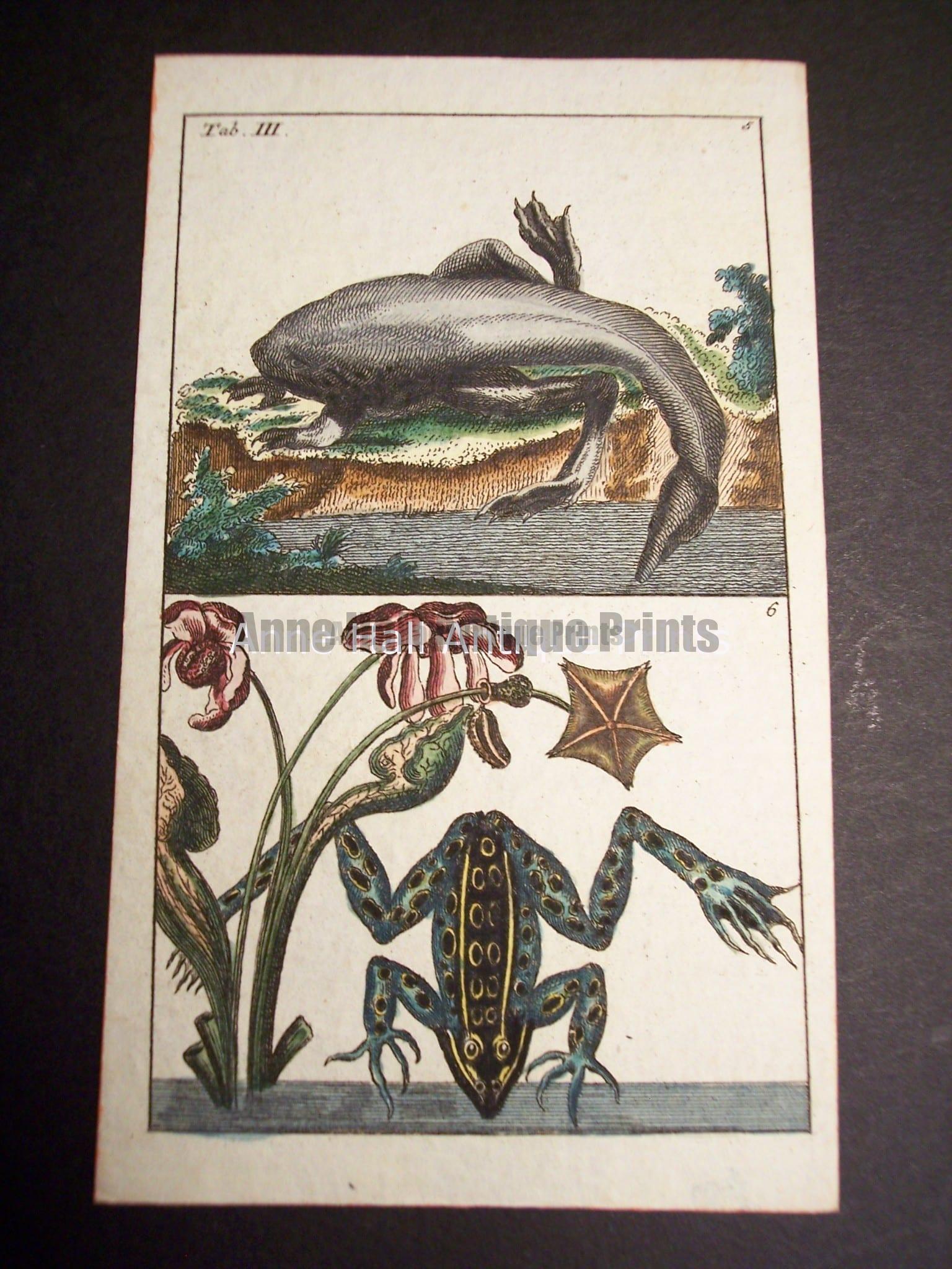 Wilhelm Frog Print 392