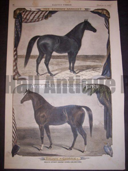 beautiful old watercolor engraving of horses, Arabians