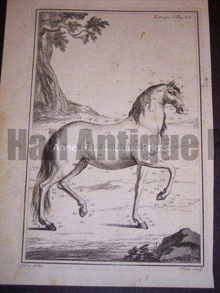 Horses: Anatomy Copper Plate Engraving from c.1760. 0499 150.