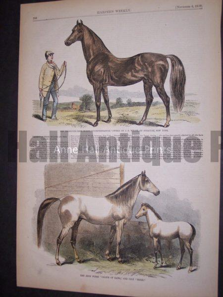 1850's artwork of Arabian horses.