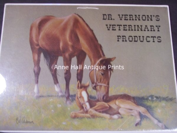 Veterinarian advertisement with Quarter Horse mare & foal, lithograph from 1910.
