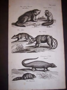 Strange Creatures Merian