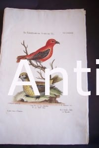 Seligmann George Edwards Bird 0629