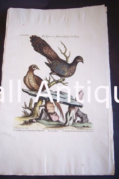 Seligmann George Edwards Bird 0630