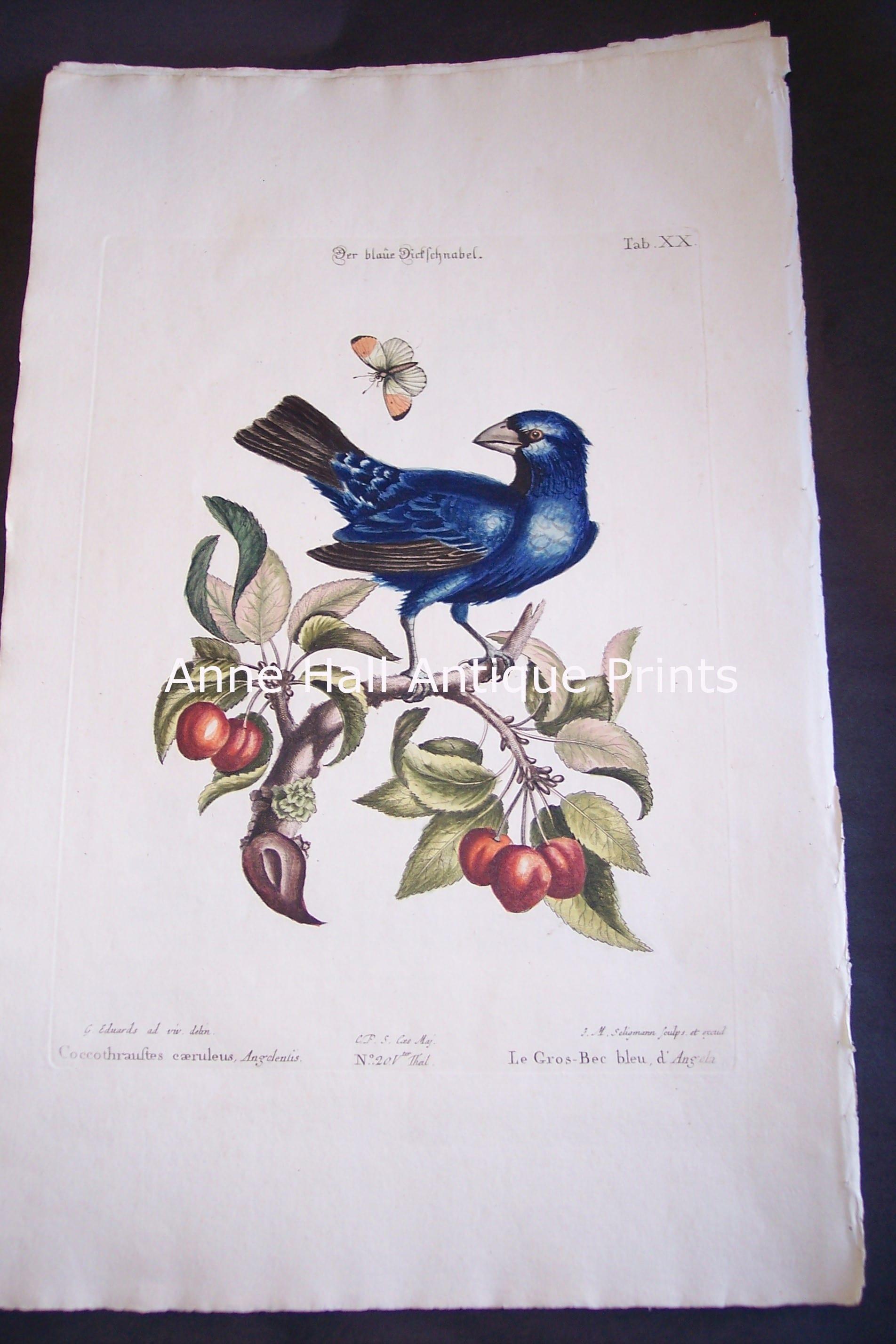Seligmann George Edwards Bird 0631