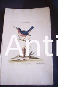 Seligmann George Edwards Bird 0633