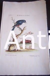 Seligmann George Edwards Bird 0635