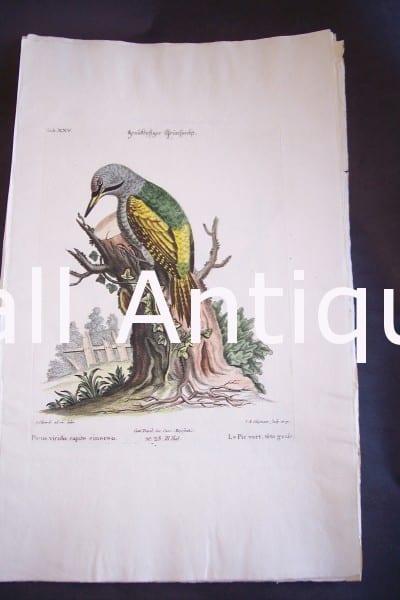 Seligmann George Edwards Bird 0637