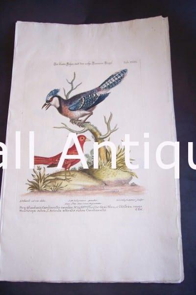 Seligmann George Edwards Bird 0640