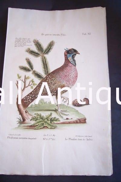 Seligmann George Edwards Bird 0641