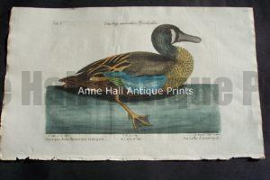 Mark Catesby Duck Plate 100