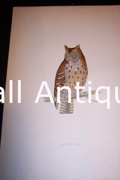 Antique owl engraving