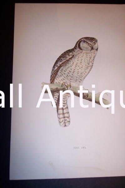 Antique owl engraving
