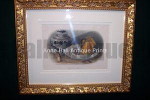 Audubon Common Mouse Framed 0846