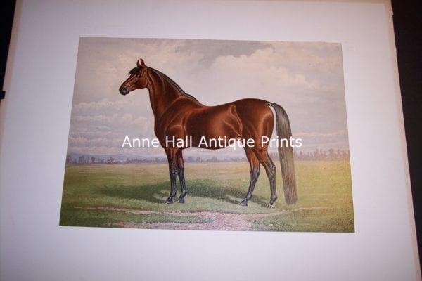 Henry Stull Horse Print