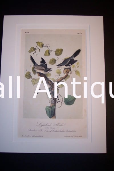 JJ Audubon Birds Lockwood 1870