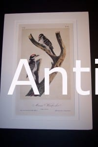 JJ Audubon Birds Lockwood 1870