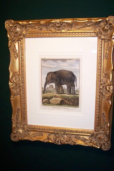 Buffon Hand Colored Engraving Framed Elephant