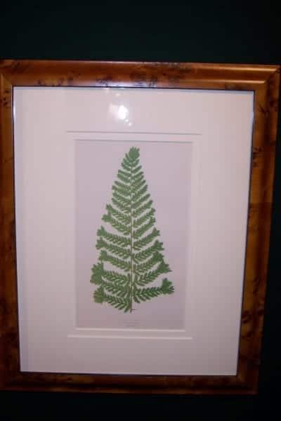 Antique fern chromolithograph framed 4