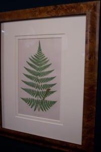 Antique fern chromolithograph framed 3
