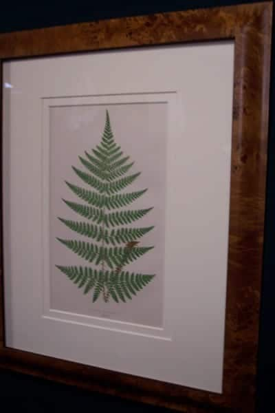 Antique fern chromolithograph framed 3