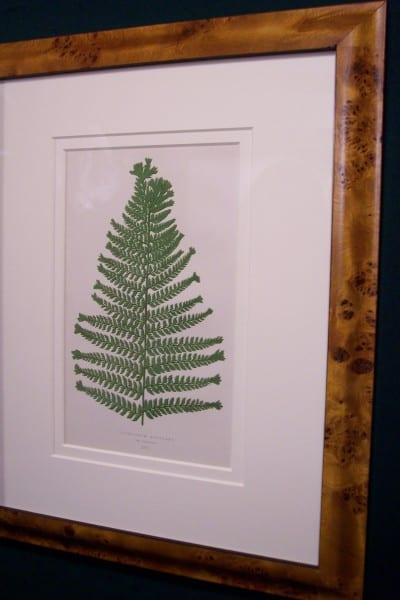 Antique fern chromolithograph framed 1