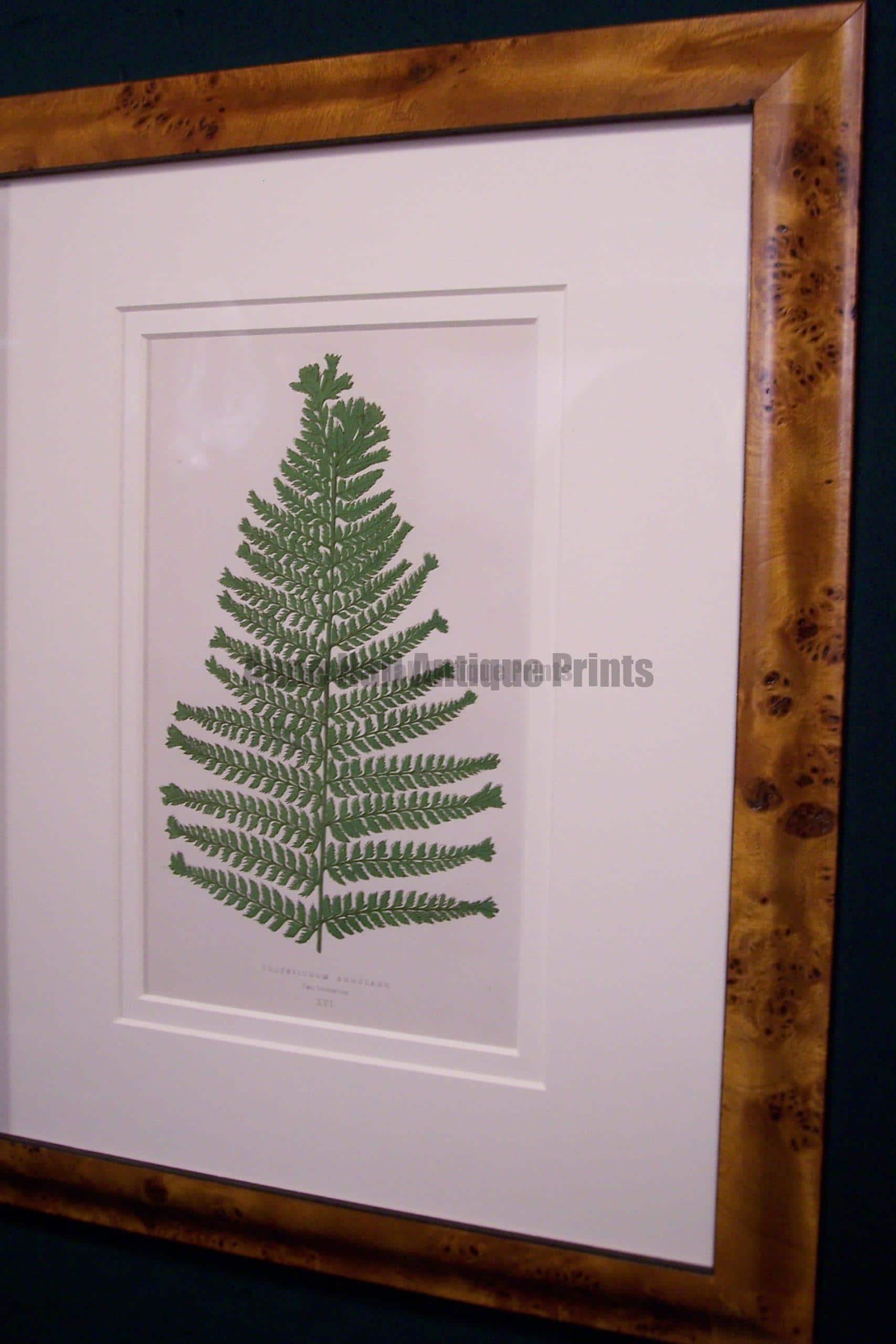 Antique fern chromolithograph framed 1
