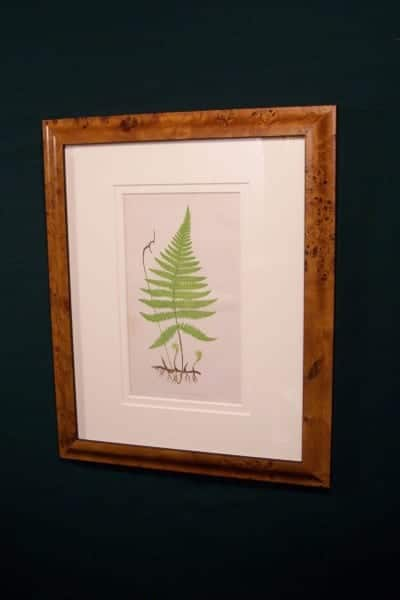 Antique fern chromolithograph framed 2