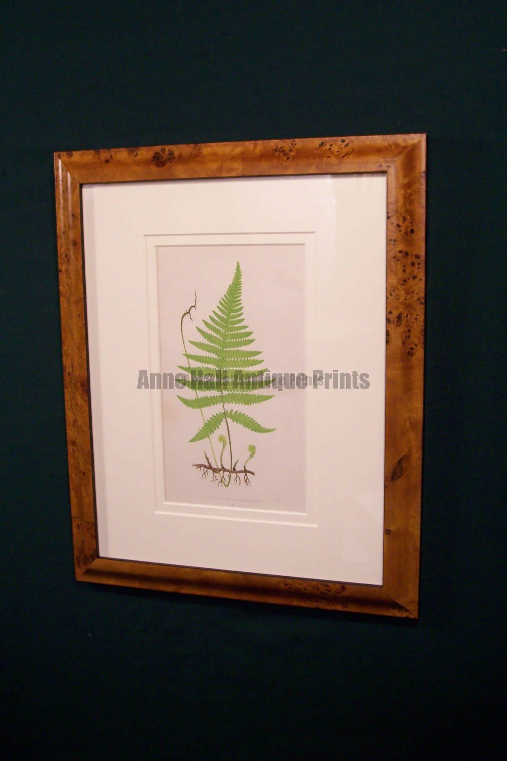 Antique fern chromolithograph framed 2