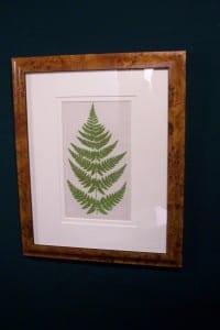Antique fern chromolithograph framed 9