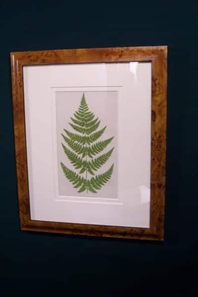 Antique fern chromolithograph framed 9