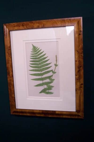 Antique fern chromolithograph framed 8
