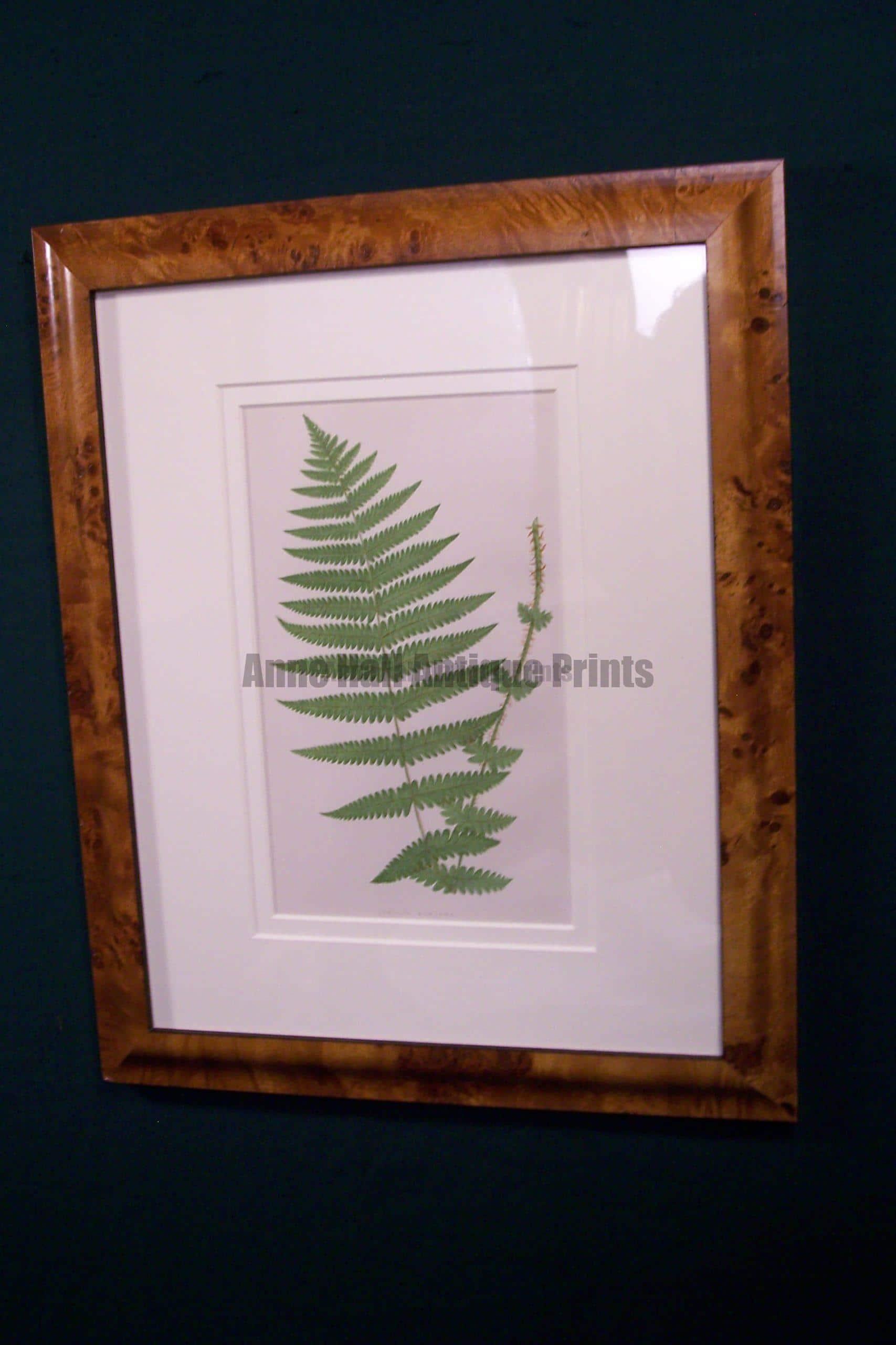 Antique fern chromolithograph framed 8